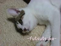 Arisuzu2pg