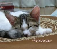 Suzu_1